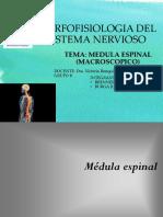 Medula Espinal Expo