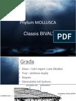 03 - Bivalvia.ppt
