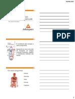 Aula - U1 E1 - Cardiovascular - Anatomia