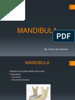 MANDIBULA_teoria_6 - Copia - Copia - Copia