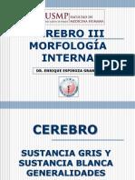 Cerebro III Morfologia Interna