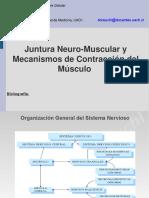 musculoycontraccionmuscular.pdf