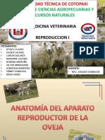 Anatomia Del Aparato Reproductor de La Oveja