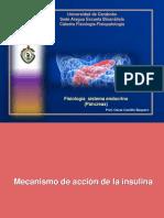 4ta Parte Páncreas Endocrino