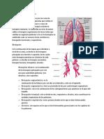 Anatomia Estructuras Del Pulmon