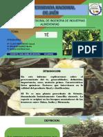 DIAPO DE TEEEE.pptx