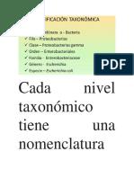 Cada Nivel Taxonómico Tiene Una Nomenclatura Particular