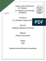PV_ Identificacion de Plantas_ Alejandra Bautista Contreras.
