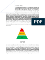 Analisis de La Sociedad y Economia Urbana