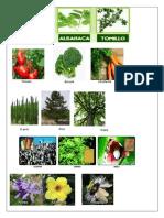 3 imagenes  medicinales, alimenticia, textiles y medicinal.docx