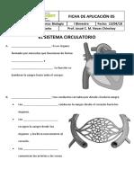 Ficha de Aplicación - Sistema Circulatorio y Excretor - 4to Grado