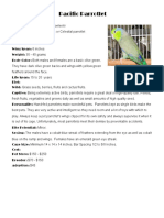 Bird Pages Parrotlet