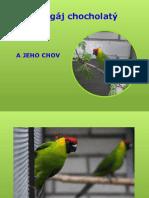 Ľuboš Pavlech - Chov papoušků chocholatých