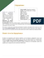HIPOPÓTAMO (Características, Tipos, Qué Comen, Dónde Viven...)