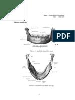 Anatomi mandibula