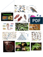Imagenes de Biologia