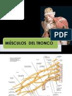 15.-Musculos tronco