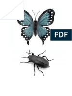 insekti (2)