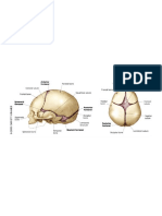 anatomy notes.pdf