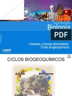 Ciclos Biogeoquimicos y Cadenas