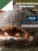 hipopotamo-pigmeu_pt