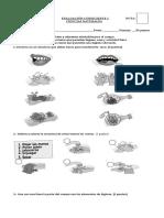 274457509-Evaluacion-de-Ciencias-Naturales-Habitos-de-Higiene-y-Vida-Saludable.doc