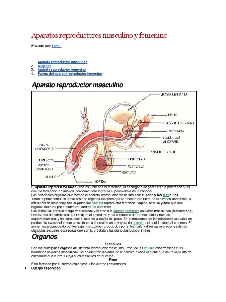 Encantador Sistema Femenino Hoja Reproductiva Componente - hojas de ...