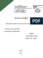 structuri-arhetipale- examen