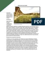 Importancia Del Bambu