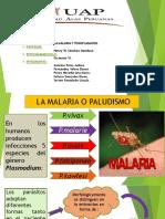 Malaria o Paludismo Expo (1)