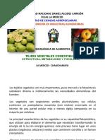 TEJIDOS-VEGETALES-I (1)