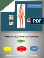 1. Aparatos Digestivo y Genitourinario