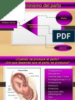 04 Determinismo Del Parto
