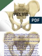 Pelvic Project