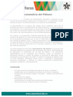 agroindustria_platano
