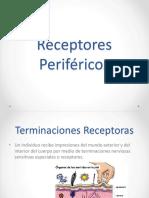 receptoresperifricos