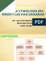 Anatomia Renal Drlazo