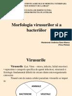 Morfologia Virusurilor Si a Bacteriilor - Andreica Oana-Bianca Master Protectia Plantelor Anul 1