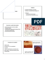 14_clostridium.pdf