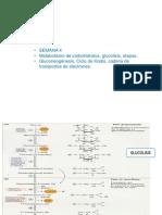 Clase 3 de Bioquimica (1).pptx
