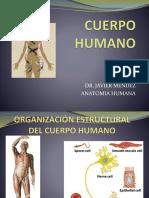 Anatomia Del Cuerpo Humano Issem
