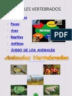 106850072-Animales-Vertebrados.ppt