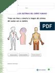 2.- Los sistemas del cuerpo humano.docx