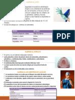 DIAPOS DE GUIA DE MANEJO DE REACIONES ALERGICAS EN EL CONSULTORIO.pptx