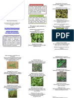 Folder Plantas Indicadoras