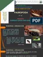 Paurópoda - Rodríguez García Tania Isabel 4A