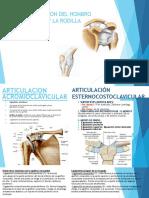 Seminario-art-rodilla-y-hombro-2-1.pptx