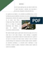 BOTANICA (Autoguardado).docx