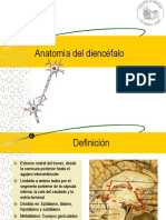 Anatomia Del Diencefalo