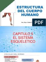 Anatomia Huesos Descripcion General
